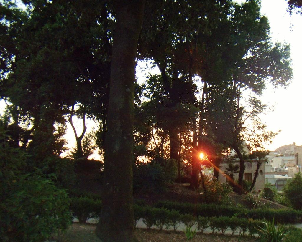 tramonto fra gli alberi - erice