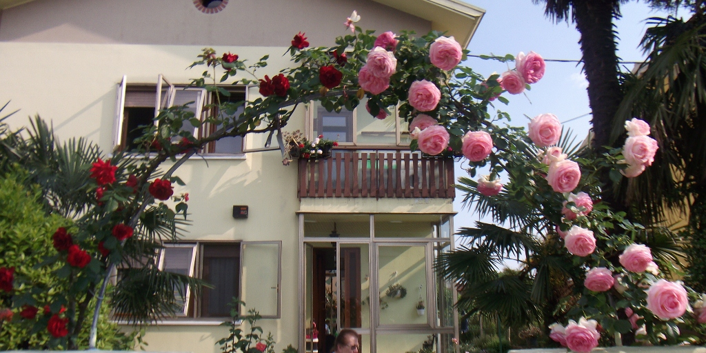 rose arco