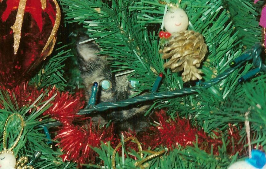 trovate il gatto nascosto
