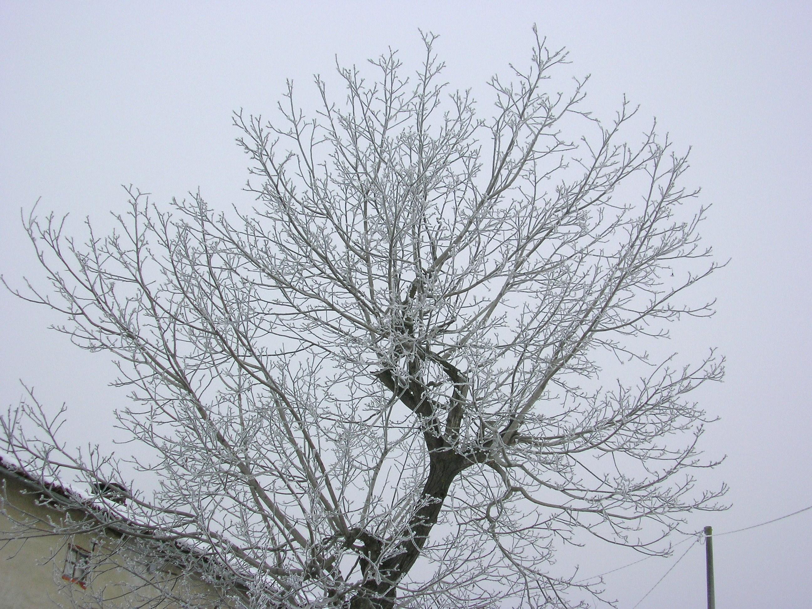 piemonte-inverno 2008/09